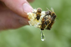 Fanshawe apiary