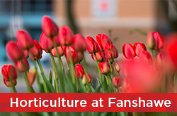 Horticulture at Fanshawe
