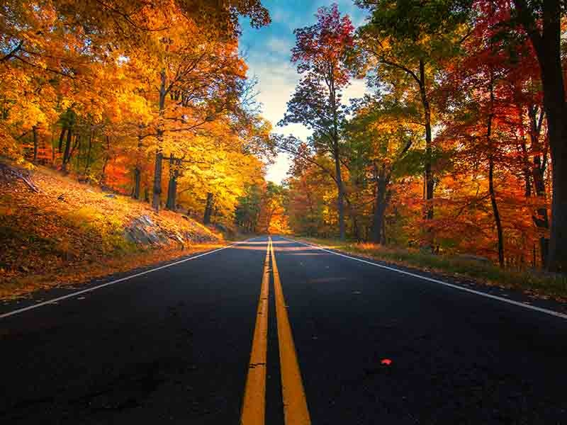 Best road trips you can take near London, Ontario this fall