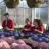 Horticulture students in the Spriet Family Greenhouse, March 2017