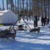 AEL1J students dog-sledding